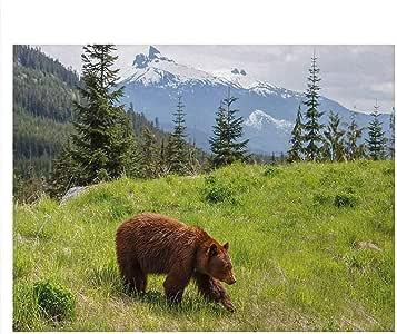 Amazon.com : ScottDecor Bear Undersea Backdrop for