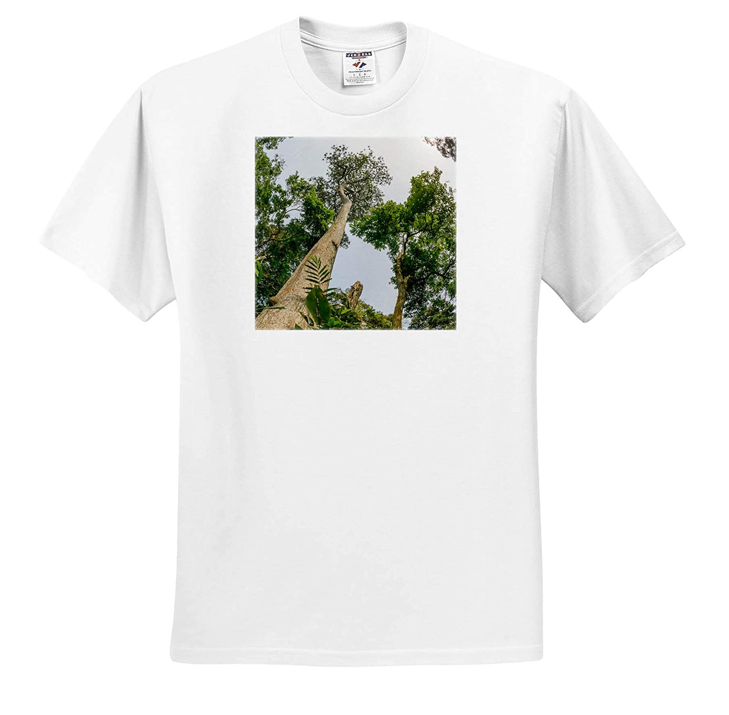 Adult T-Shirt XL Trees ts/_310396 Republic of The Congo 3dRose Danita Delimont Marantaceae Forest Looking up Tree