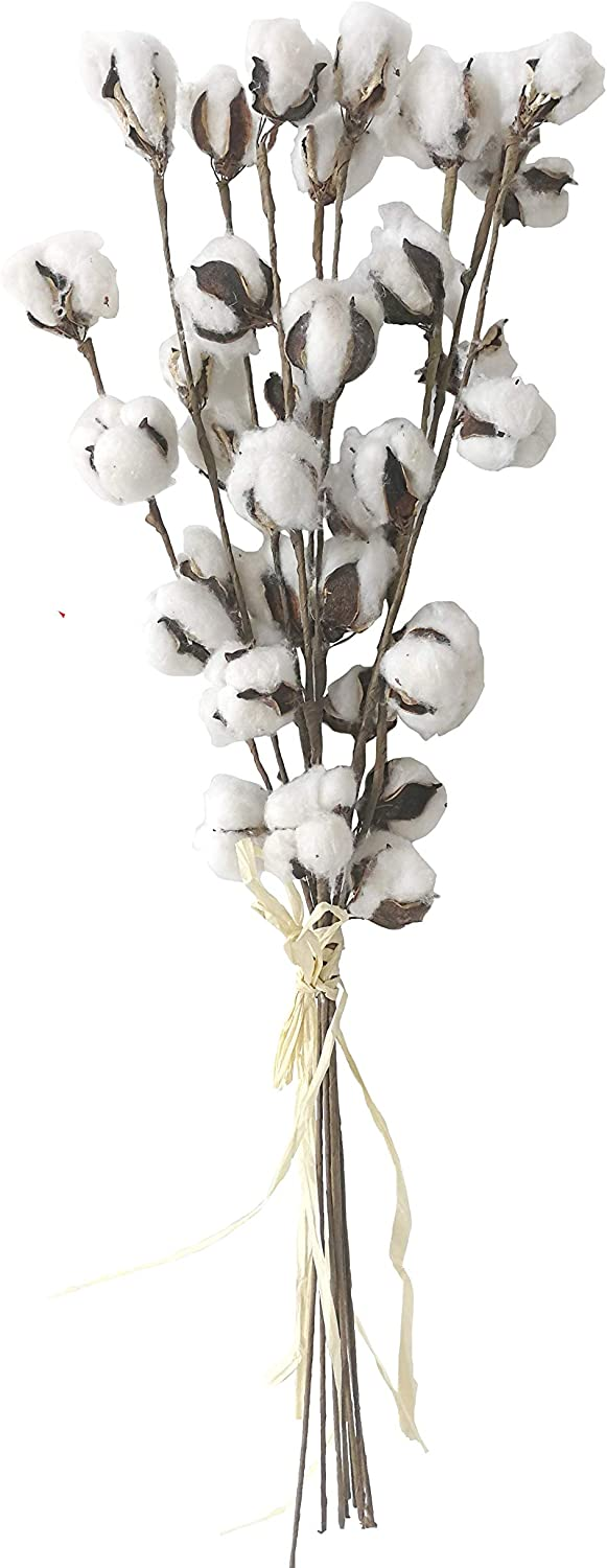 Xmas Arts& Crafts 2 Packs of 26 inches Cotton House Stems Farmhouse Decoration/Real Cotton Decorations-9 Stems/Pack