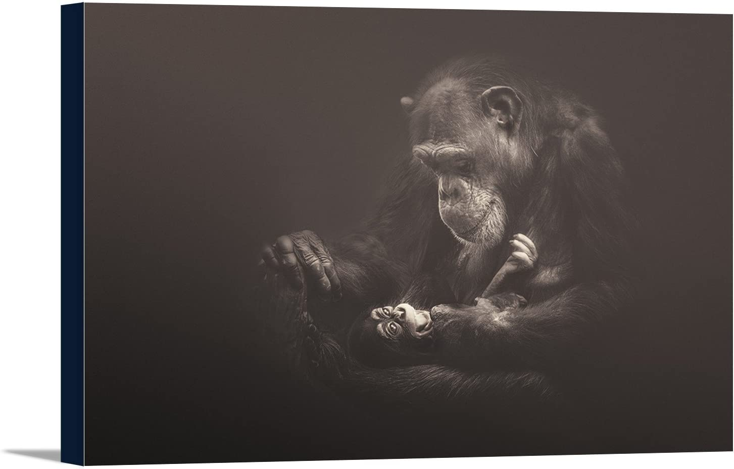 Mother Chimpanzee and Baby 36x24 Framed Gallery Wrapped Stretched Canvas