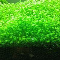 Plantas acuáticas de exterior