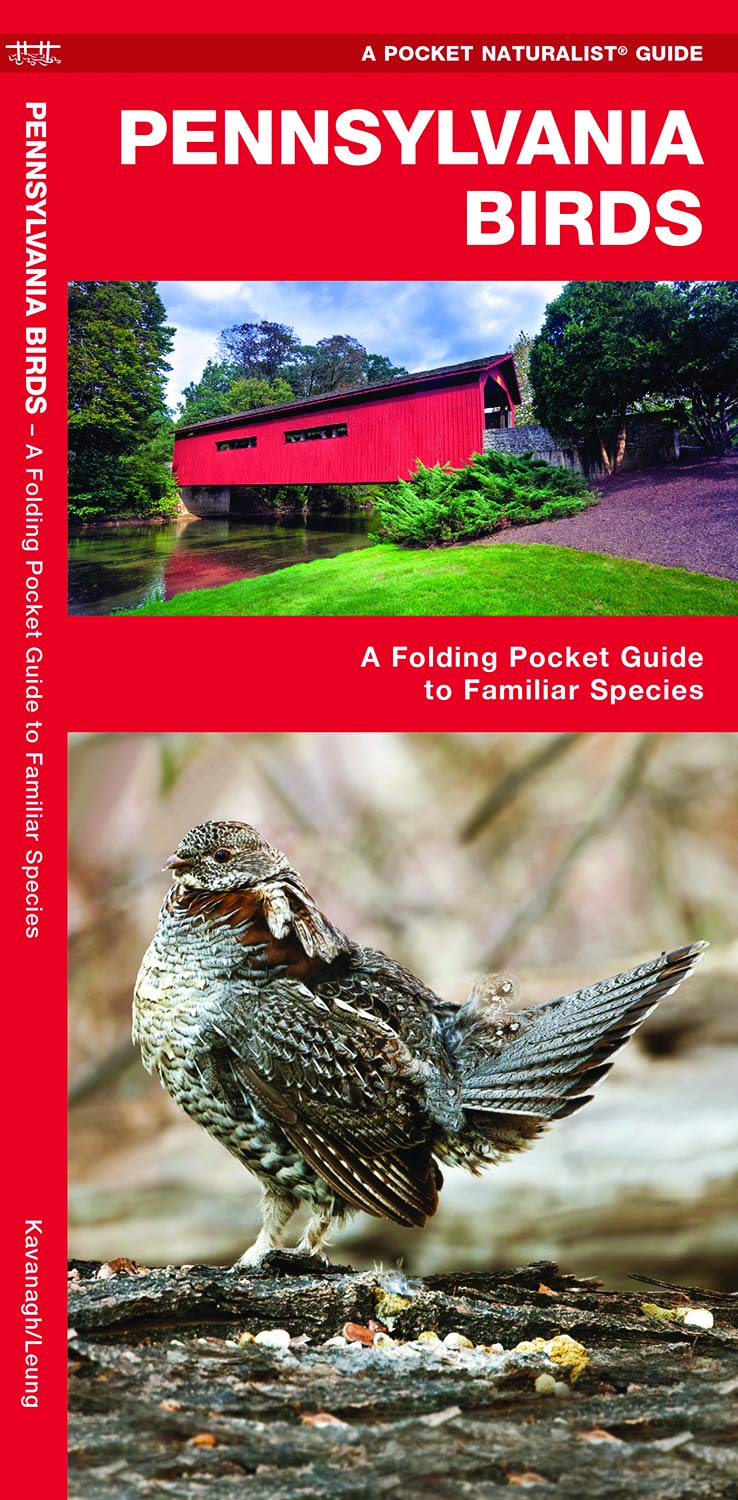 Pennsylvania Birds: A Folding Pocket Guide to Familiar Species (Pocket  Naturalist Guides): James Kavanagh, Waterford Press, Raymond Leung:  9781583550090: ...