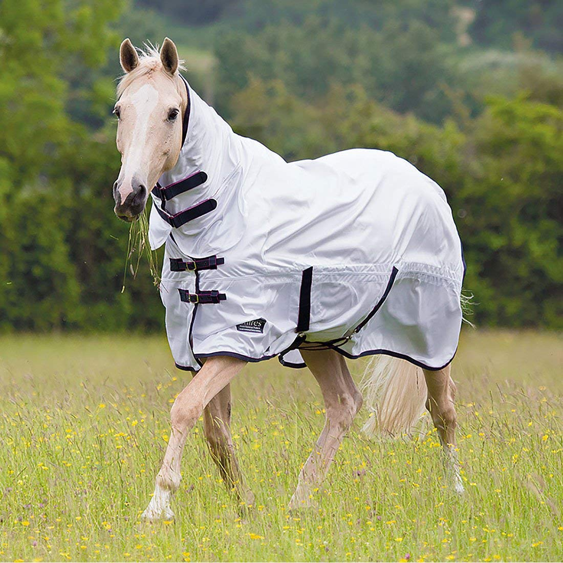 Shires Shires Shires – Tempest Cavallo Combo 2016, 5ft 0in 90270f
