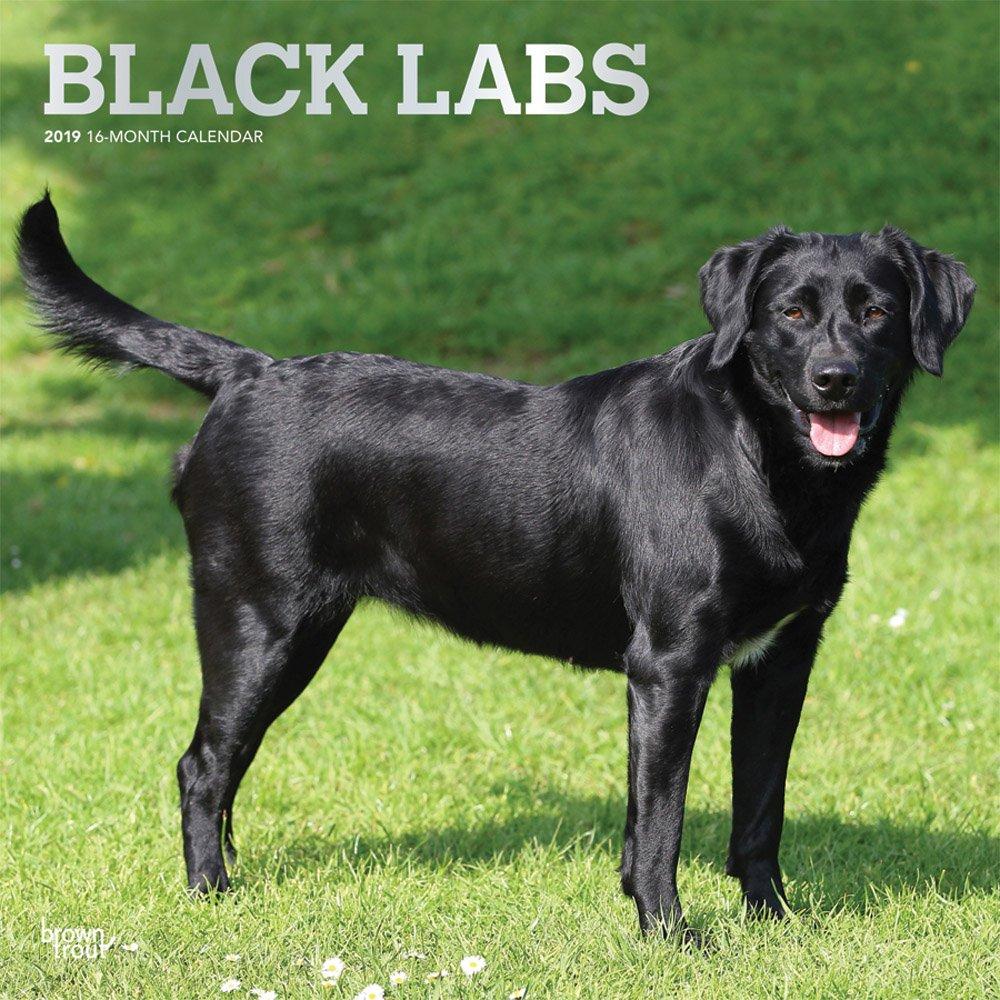 Labrador Retrievers, Black 2019 Square Wall Calendar (Multilingual) Calendar – Wall Calendar, 1 Sep 2018 BrownTrout 1465099735 Animal Care Pets