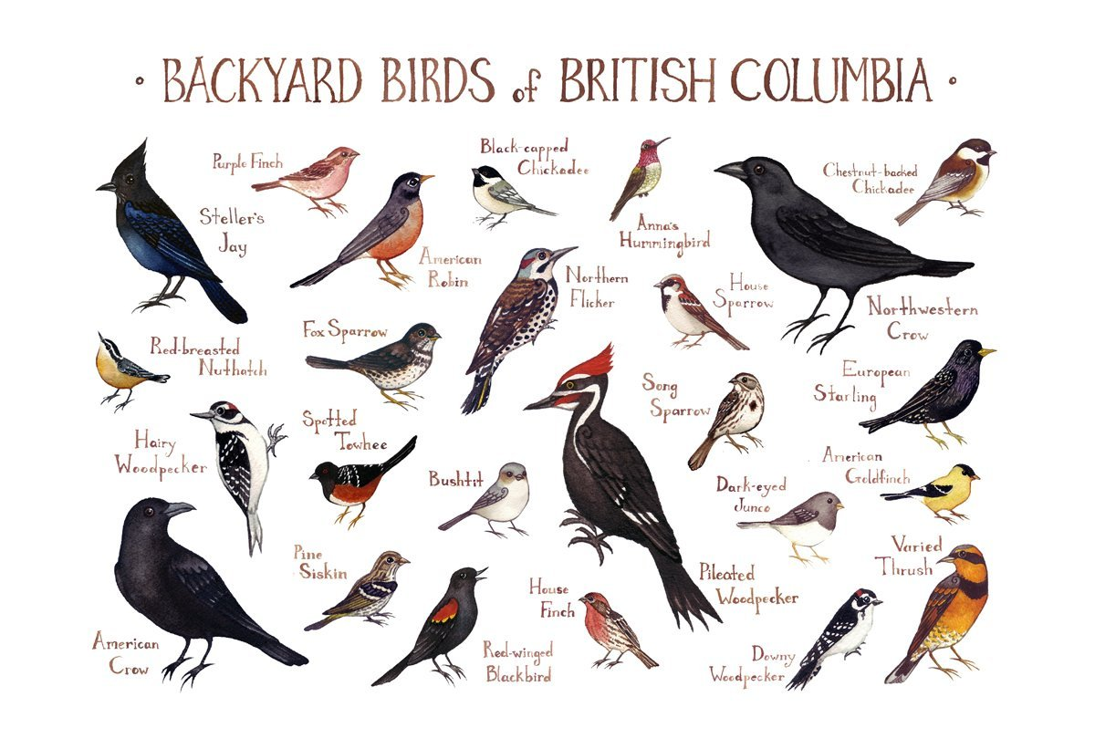 amazon com backyard birds of british columbia canada field guide