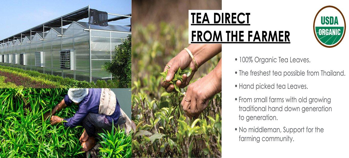 Natural Lemongrass Pandan Tea – 3 5oz Organic Herbal Tea – Tasty, Stress  Relief, and Relaxing Pandan