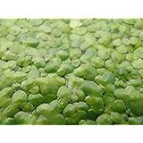 1 Porción Lenteja de agua Aprox. 1000 pcs. Lemna minor