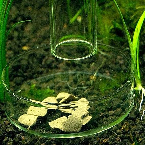 Jiamins Plana de alimentación acrílico para Acuario Bandeja de gambas contenedor Transparente: Amazon.es: Productos para mascotas