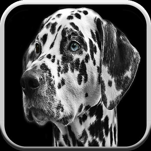 Juegos de perros gratis para los niños: Barks, Puzzle y juego de las coincidencias: Amazon.es: Appstore para Android
