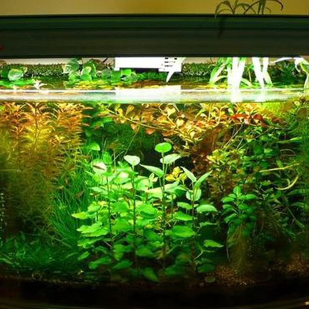 Lonlier Semillas de Hierba de Agua 10/20/50 pcs Semillas de Agua Hierba para Acuario: Amazon.es: Jardín