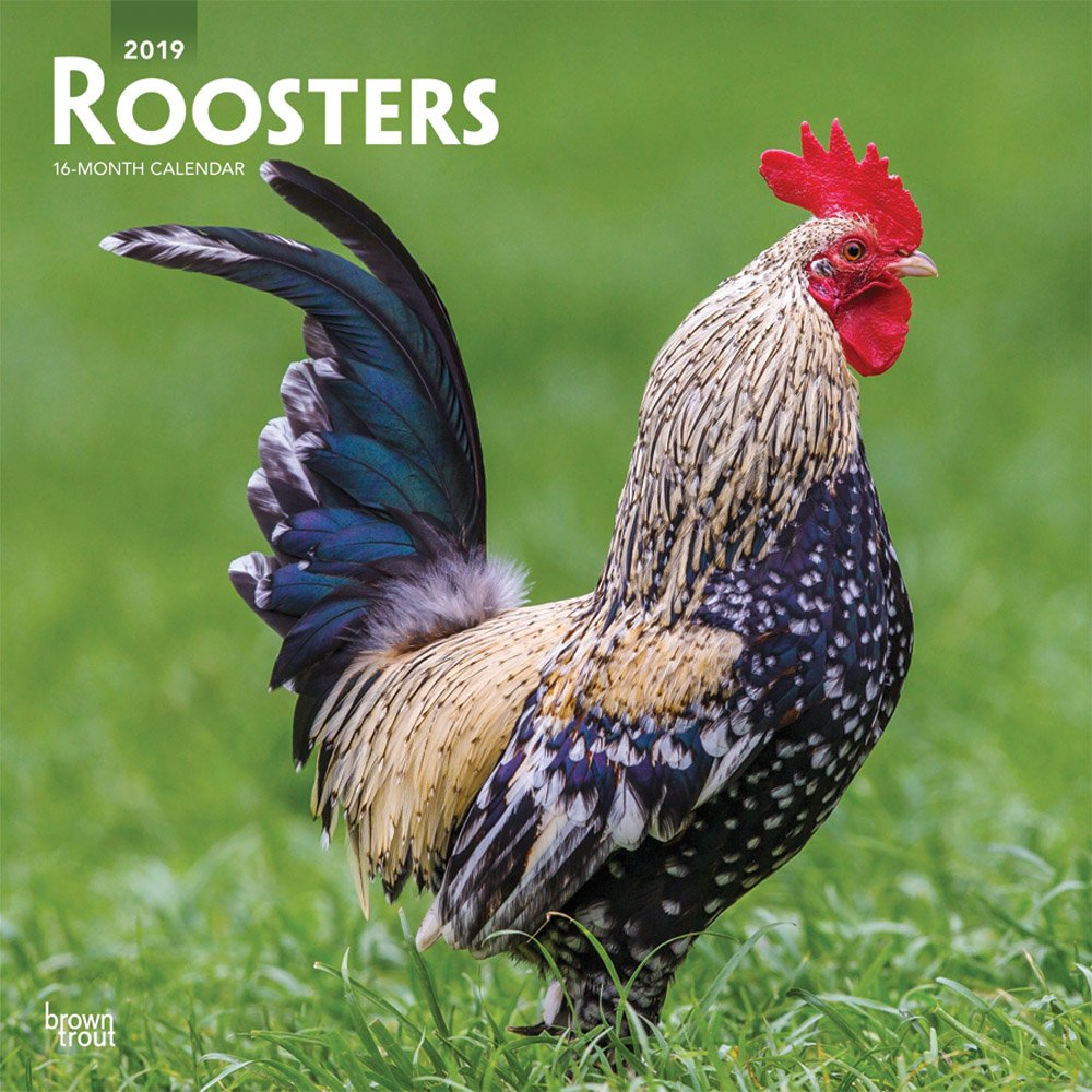 Roosters 2019 12 x 12 Inch Monthly Square Wall Calendar, Domestic Farm Barn Animals (Multilingual Edition) by BrownTrout Publishers