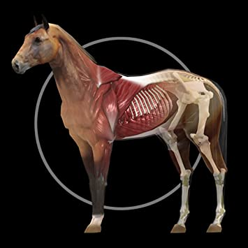Amazon Horse Anatomy Equine 3d Appstore For Android