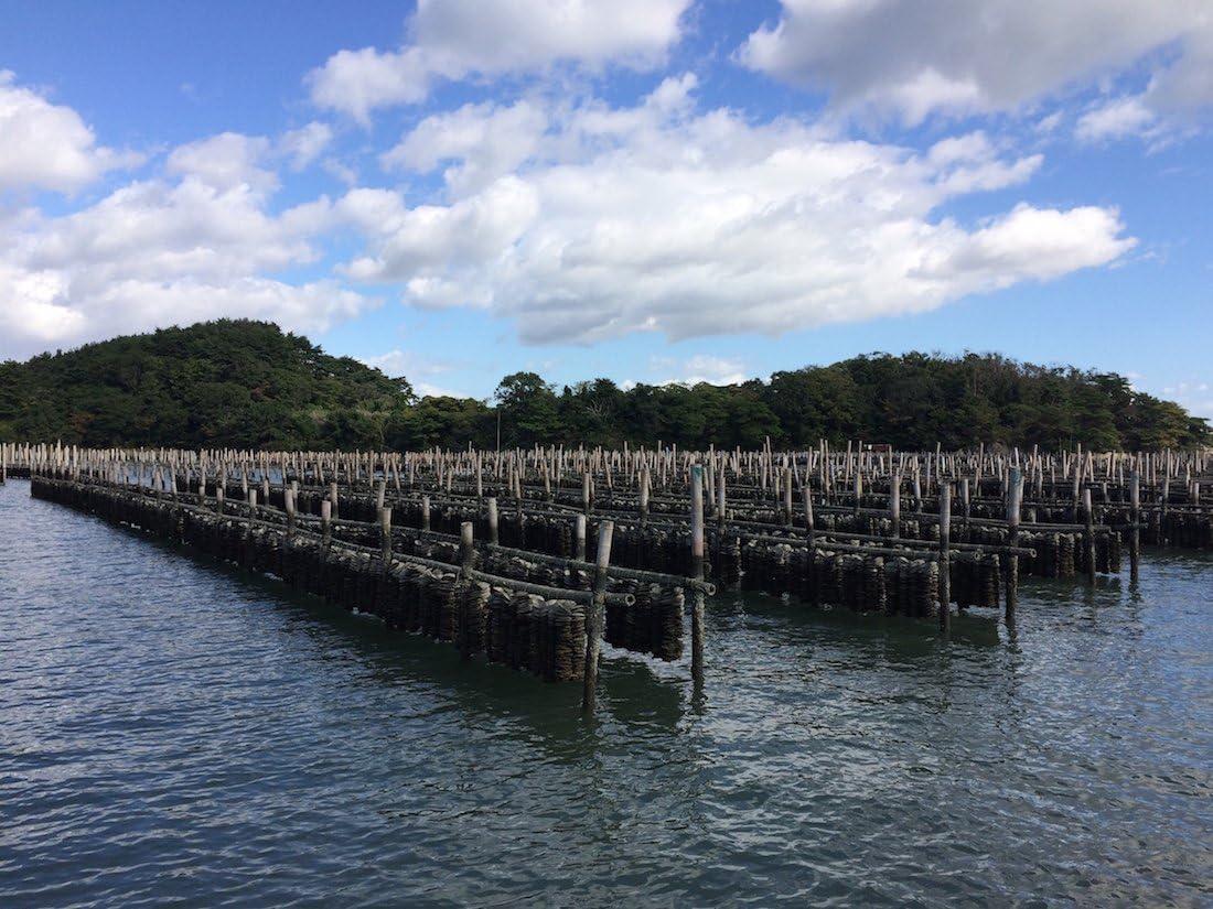殻付き牡蠣生食用宮城県産無選別(5kg約40-70個)