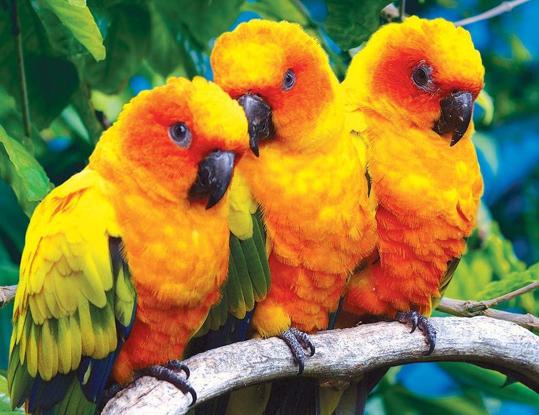 Kodak Premium Puzzles Fluffy Sun Conure Birds 100 pc Jigsaw Puzzle