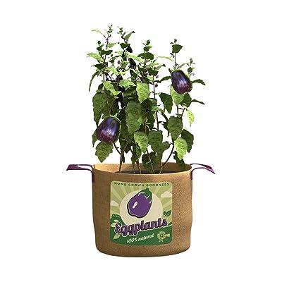 Panacea 15 Gallon Eggplants Grow Bag : Garden & Outdoor