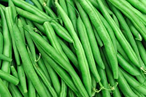 String Bean Bush Blue Lake   50+ Seeds +   Non-GMO, Heirloom Seeds, Grow Your Own Food   Vegetable Seeds for Planting