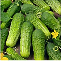 David's Garden Seeds Cucumber Pickling Boston SS3009 (Green) 50 Non-GMO, Heirloom Seeds