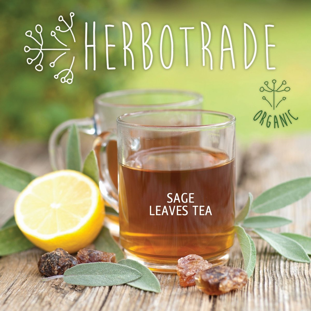 100% Pure Sage Officinalis (Salvia officinalis) dried leaves Natural Wildcrafted Herbal Tea