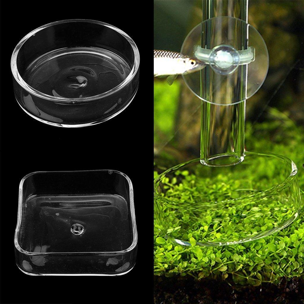 SGerste Cuenco de Cristal Transparente para Acuario, con Tubo DE 22 cm: Amazon.es: Productos para mascotas