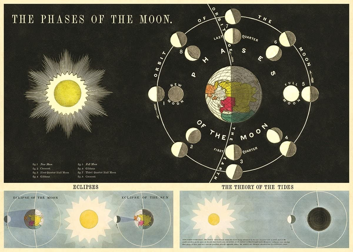 Phases of The Moon Chart Decorative Paper Sheet 20 x 28 Cavallini /& Co