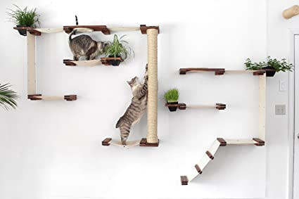 Merveilleux CatastrophiCreations Cat Mod Garden Complex Handcrafted Wall Mounted Cat  Tree Shelves With Planter For Cat Grass