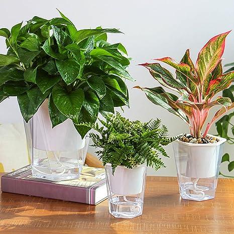 Wanfor - Maceta de riego para jardín, diseño de Flores y ...