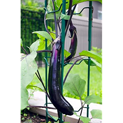 Eggplant, Organic, Purple Long Eggplant, Italian Heirloom~ 500 Vegetable Seeds ! : Garden & Outdoor