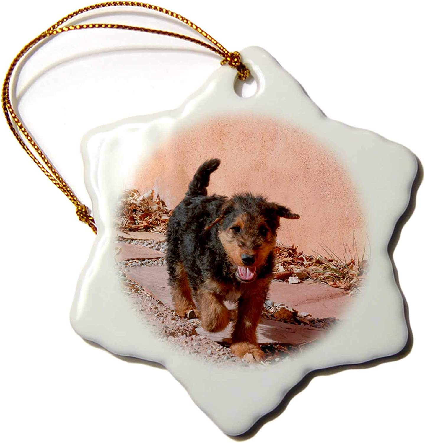 3dRose Danita Delimont - Dogs - Airedale Puppy Walking on Garden Path - Ornaments (ORN_230292_1)