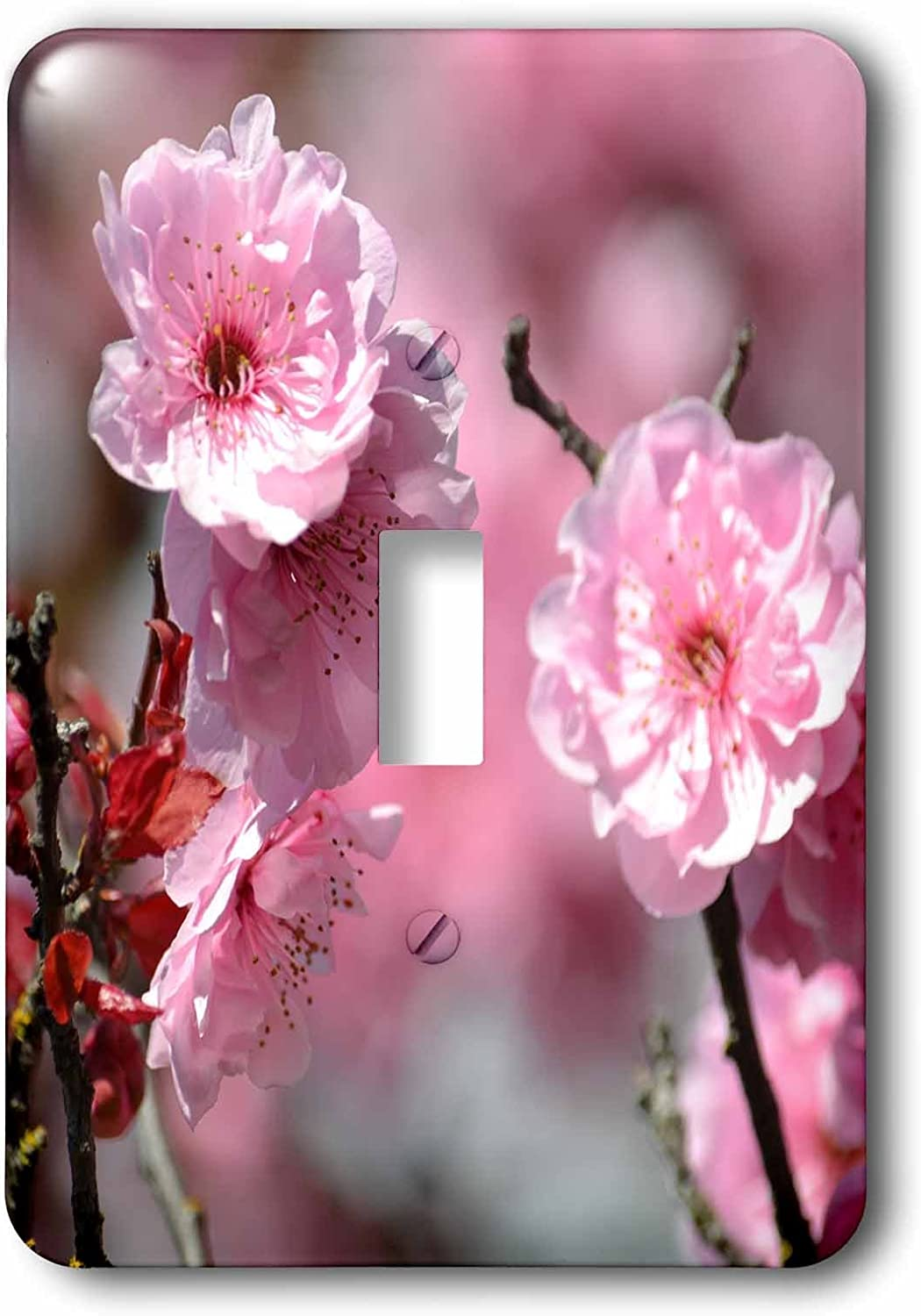3drose Lsp 179126 1 Cherry Blossom Floral In Spring Light Switch Cover