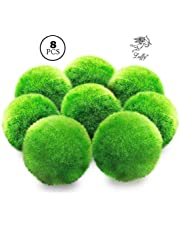 8 LUFFY Marimo Moss Balls - Jumbo Pack of Aesthetically Beautiful & Create Healthy Environment - Eco-Friendly, Low Maintenance & Curbs Algae Growth - Shrimps & Snails Love Them