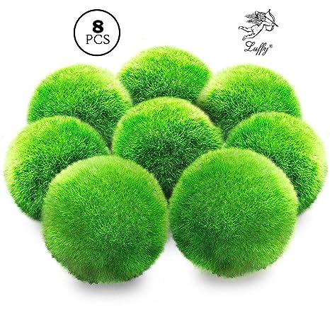 Marimo - Bola de musgo