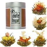 Flowering Tea Sampler Tin - 5 Different Varieties of Blooming Tea - Vacuum Sealed Tea Balls - Jasmine Tea Flowers