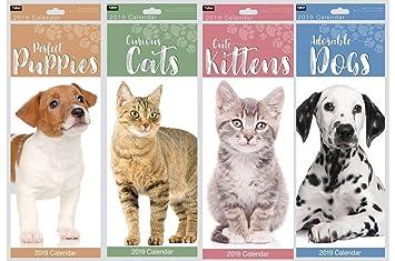 Mes delgado 2019 ver espiral atado gato foto Calendario de pared - gatos curiosos: Amazon.es: Hogar