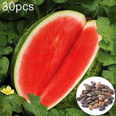 AkoMatial Watermelon Seeds, 30Pcs Seedless Watermelon Seeds Sweet Summer Watermelon Seeds : Garden & Outdoor