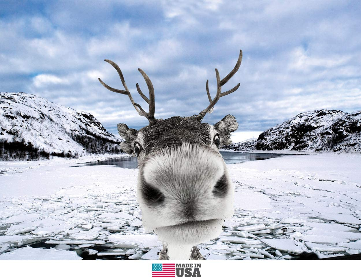 Reindeer Funny Christmas Cards Boxed Set of 12 Holiday Cards and 12 Envelopes. Made in USA.