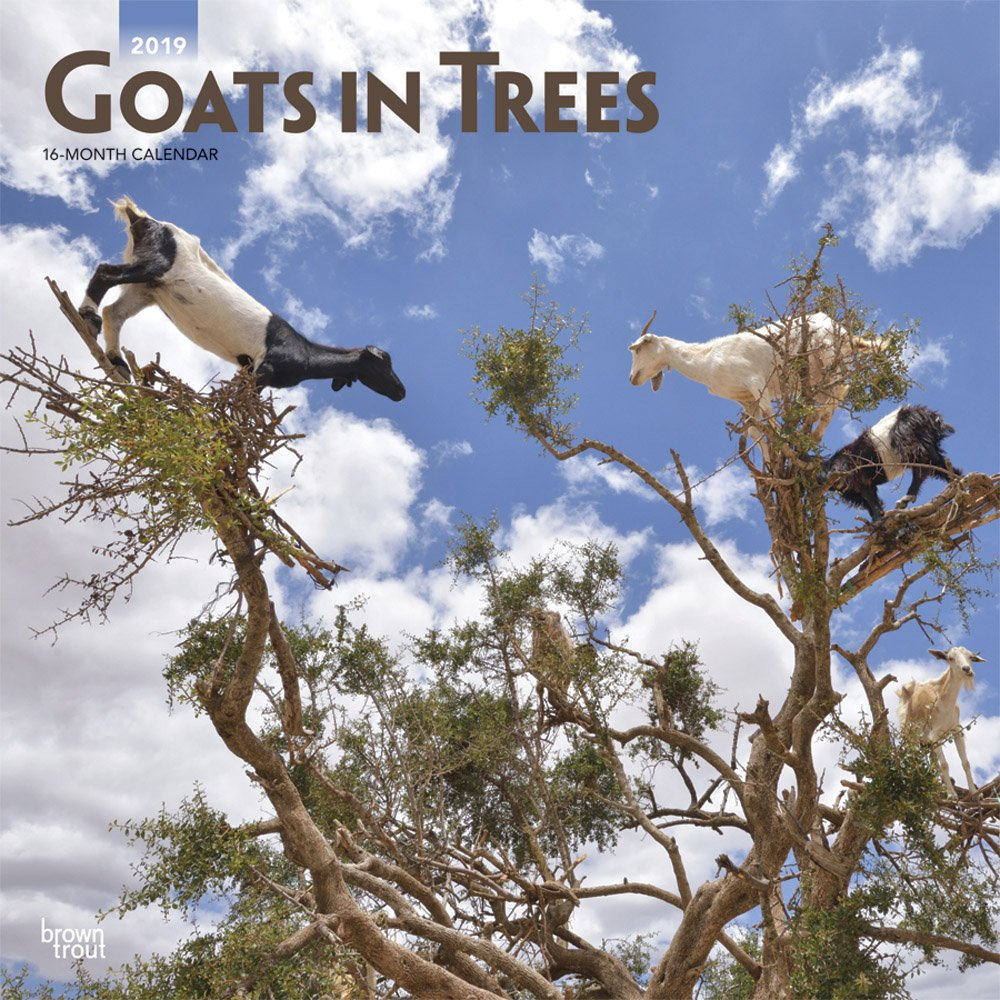 Goats in Trees 2019 Square Wall Calendar (Multilingual) Calendar – Wall Calendar, 1 Sep 2018 BrownTrout 1465075518 Animal Care Pets