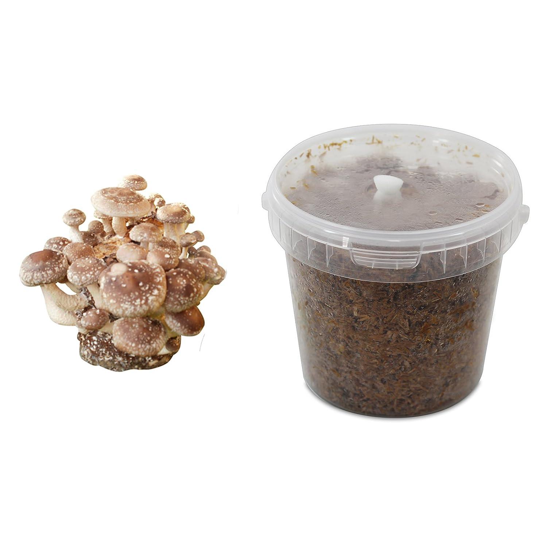 Shiitake-Substratbrut Pilzbrut, Pilze selber züchten, Pilzzucht Pilze selber züchten Pilzmaennchen