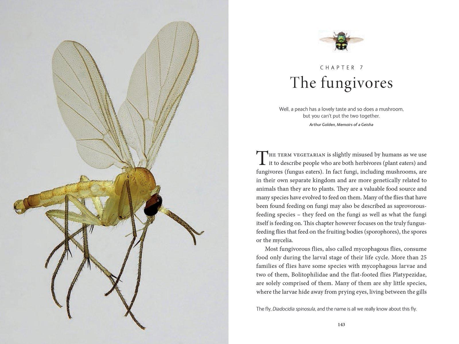 the secret life of flies erica mcalister 9781770858091 amazon