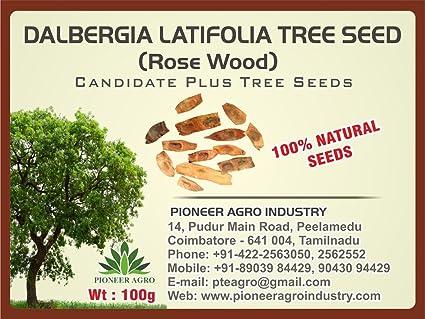 Dalbergia Latifolia(Rose wood) Tree Seed 100G: Amazon in