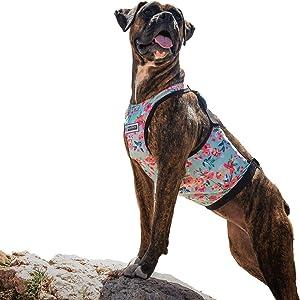 KoolSkinz Pet Lightweight, Adjustable Cooling and Heating Vest for Dogs
