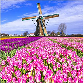 7x10 FT Windmill Vinyl Photography Backdrop,Blooming Spring Field in Holland Old Traditional Architecture Background for Baby Birthday Party Wedding Studio Props Photography