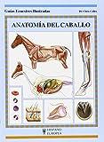Anatomía del caballo (Guías ecuestres ilustradas)