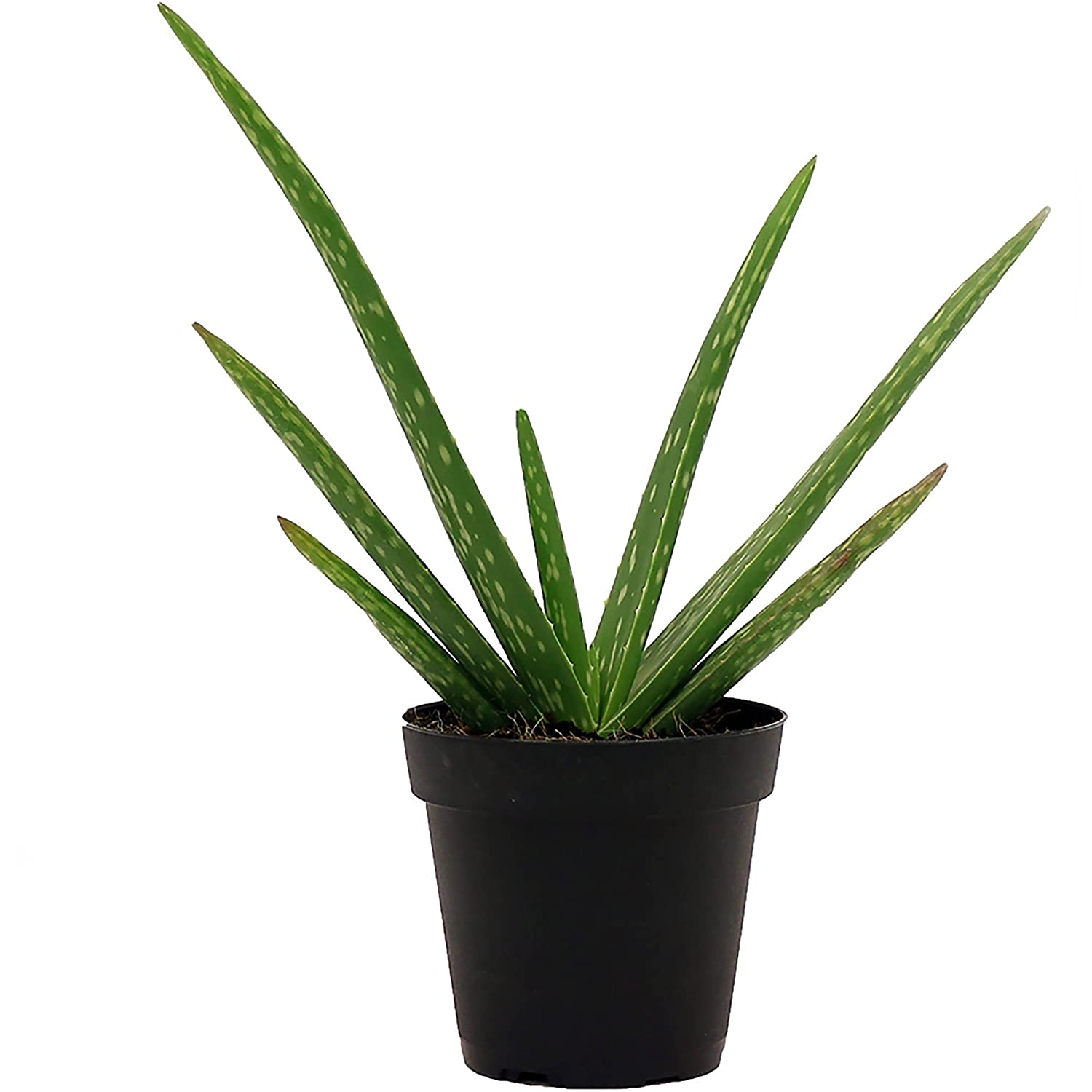 8 Low-Maintenance Houseplants 6