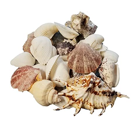 Amazon Sea Shells Mixed Bowl Vase Fillers Beach Accents Home