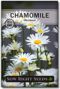 Sow Right Seeds - German Chamomile Seeds for Planting - Non-GMO Heirloom Seeds; Instructions to Plant and Grow an Herbal Tea Garden, Indoors or Outdoor; Great Gardening Gift. (1)