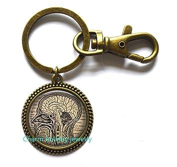 Cerebro anatómico Cerebro llavero, llavero, llavero, diseño ...