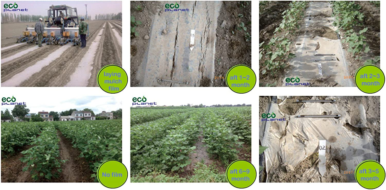 EcoPlanet - Película de Plástico biodegradable Agrícola para ...
