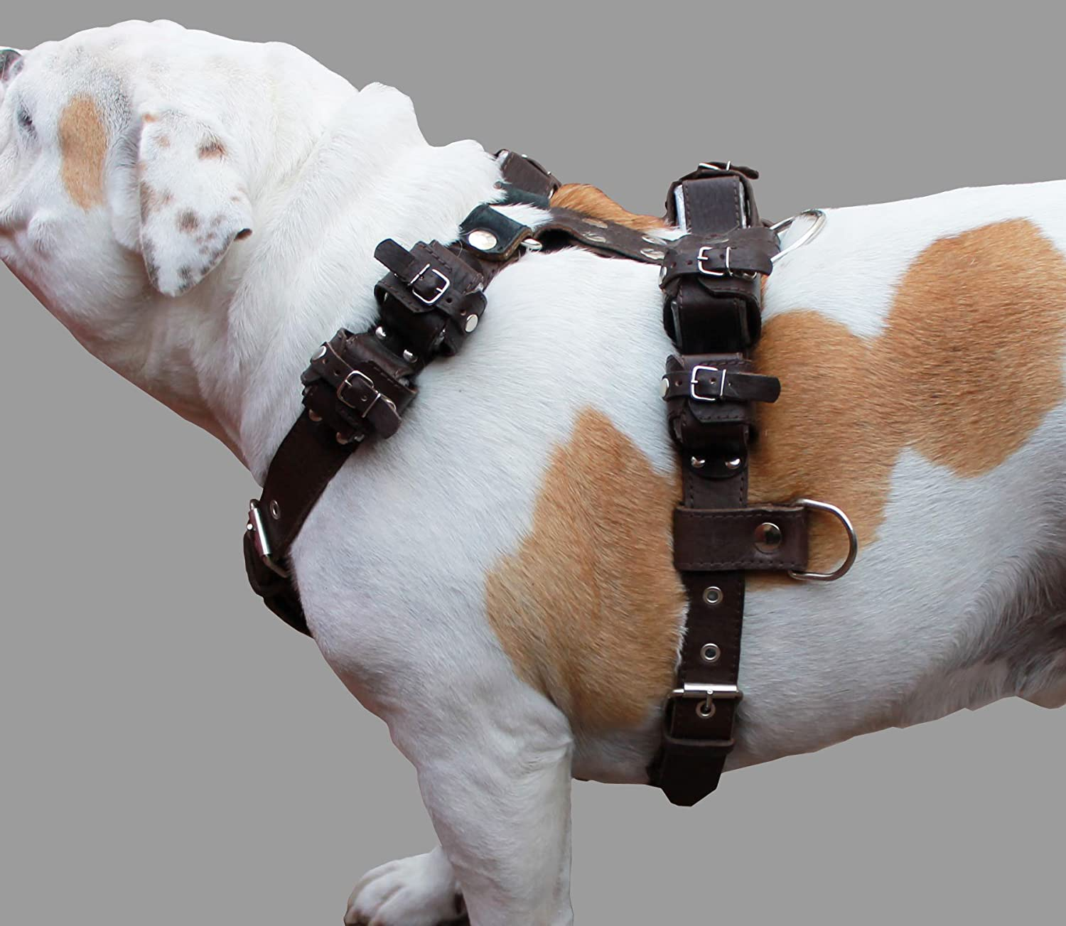 10lbs Genuine Leather Weighted Pulling Dog Harness for Exercise and Training. Fits 31 -40  Chest
