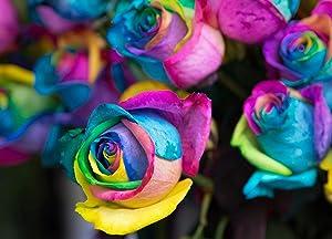 Daisy Garden 10 Pcs Rainbow Rose Seeds Flower Bush Perennial Shrub Garden Home Exotic Garden