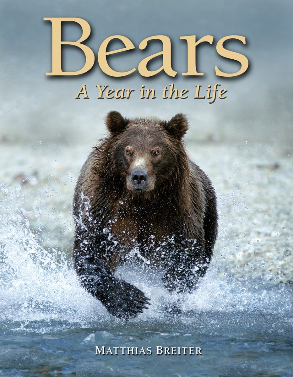 Bears: A Year in the Life PDF
